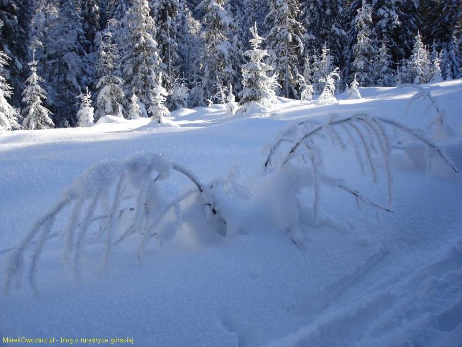 śnieżne kreacje zimy