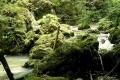 dziki potok Galbenei