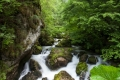 fascynujący potok Galbenei