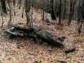 górski krokodyl