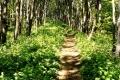 grzbietowy szlak przez masyw Cergowej