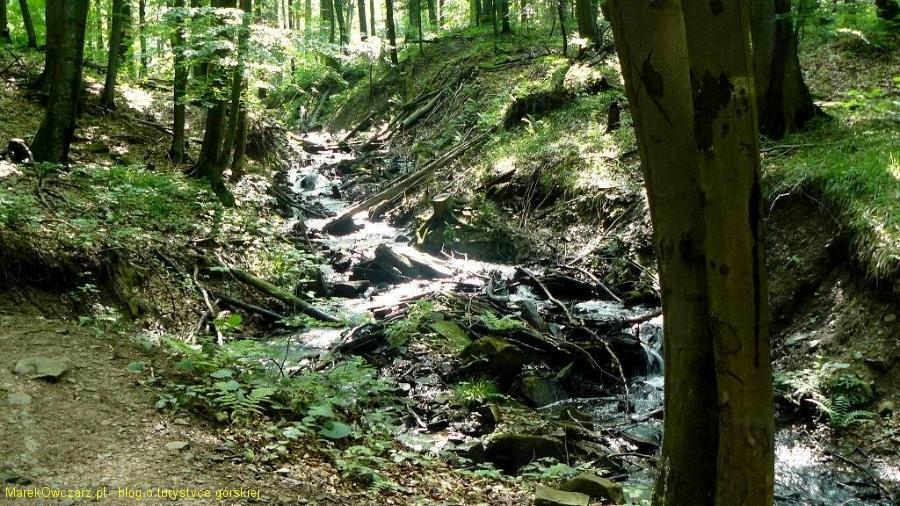 dziki jar potoku Olchowatego