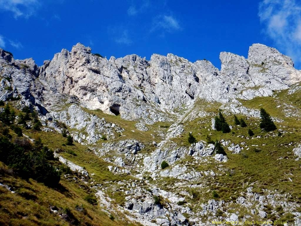 forcella d'oro (1)