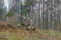 drewniany rogacz na polanie