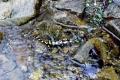 salamandra plamista na szlaku
