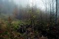 dróżki leśne pod szczytem Smrekowicy