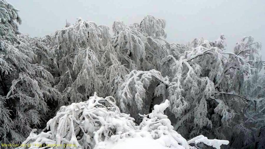 oszronione lasy widziane ze szczytu