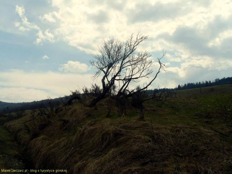 sielankowy krajobraz beskidzki