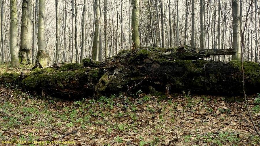 leśne prawo natury