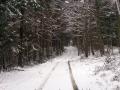 leśny szlak graniczny
