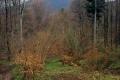 widoczek na Lackową z przełęczy Beskid