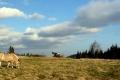 konie na szczycie Łopienia