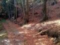 w bieszczadzkim lesie