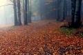 jesiennie w Beskidzie Średnim