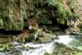 uroczyska potoku Mazak