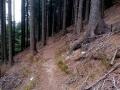 leśny trawers zboczami Javoriny