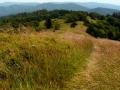 kwieciste łąki szczytowe