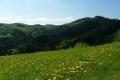 majowa łąka w Beskidzie