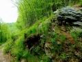 sariska vrchovina (3)