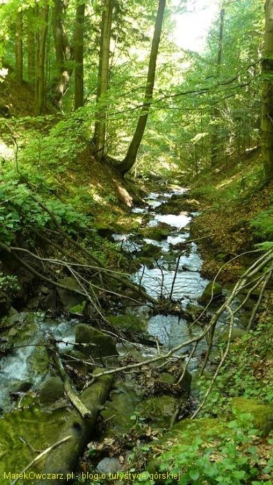 dziki jar potoku Przysłup