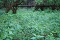 łąki umajone