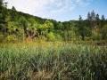 plitwickie-jeziora-35_1024_x_768