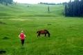 Amelka i konie