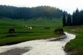 potok Bradetanului na polanie Ponor