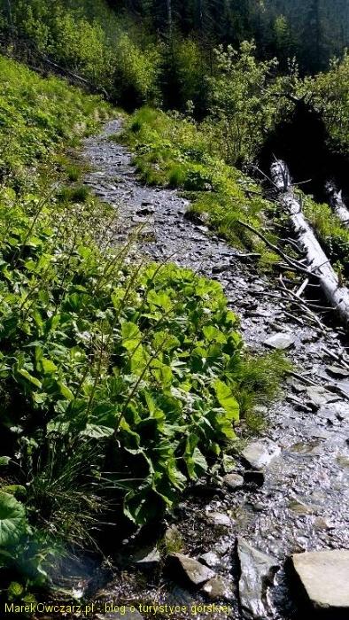 mokro na zielonym szlaku z Hali Krupowej