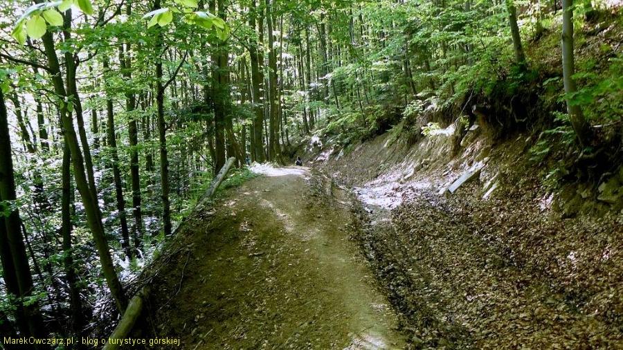 wiosenny, leśny szlak
