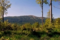 Babia Góra z Mosornego Gronia
