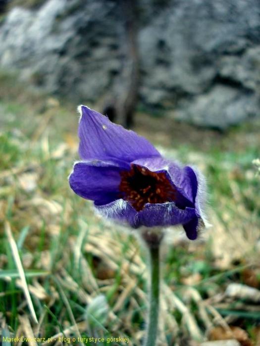 uroki wiosny
