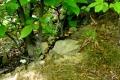 chroniona salamandra plamista na szlaku