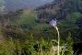 pojedynczy kwiat potrafi upiekszyc przyrodę