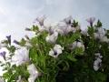 pasmo jaworzyny 2007 123_(1024_x_768)