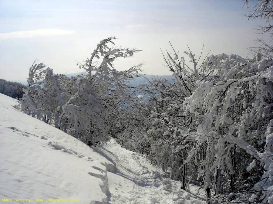 polonina-wetlinska-zima-2009-031_1024_x_768