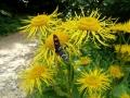 kwiat w ujęciu by Ela.K
