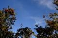 vyhorlat-pazdziernik-2009-056_1024_x_768