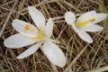droga-nad-reglami-wiosna-07-006_1024_x_768