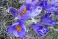 droga-nad-reglami-wiosna-07-067_1024_x_768