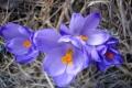 droga-nad-reglami-wiosna-07-075_1024_x_768