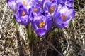 droga-nad-reglami-wiosna-07-110_1024_x_768