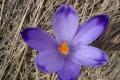 droga-nad-reglami-wiosna-07-154_1024_x_768