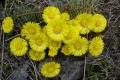 droga-nad-reglami-wiosna-07-200_1024_x_768