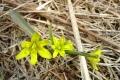 droga-nad-reglami-wiosna-07-272_1024_x_768