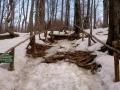 strome podejście przez las
