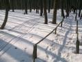 w lesie, przy zejściu
