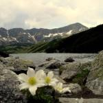 Jeziora górskie