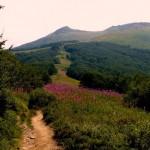Przez Smreka i Połoninę Wetlińską głównym szlakiem beskidzkim