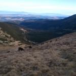 Rekordowa liczba kozic w Tatrach